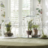 Glass Cloche Containers