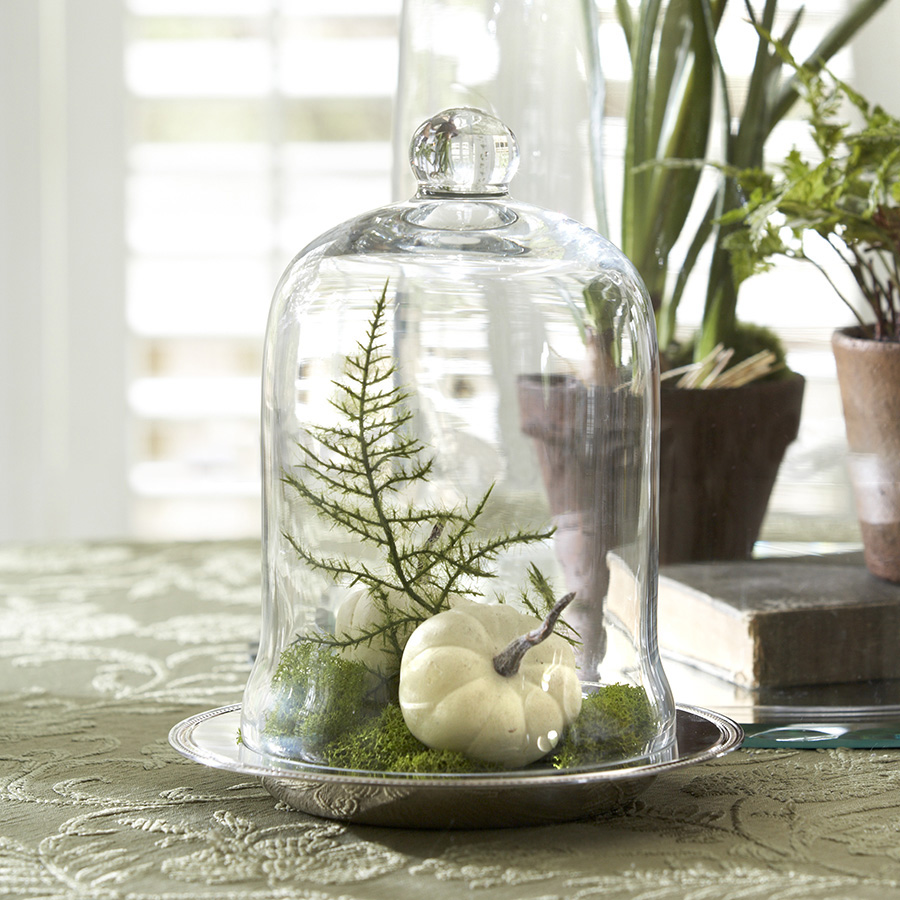 Glass Cloche Dome Displays